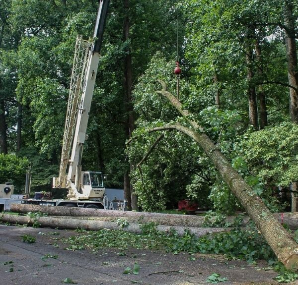 The Riverbend Landscapes and Tree Service crew removes trees using a crane.